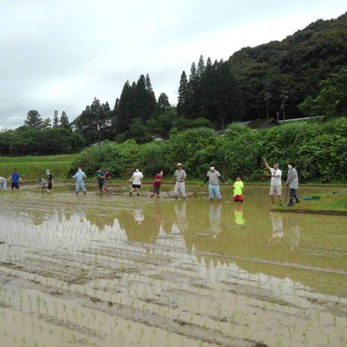 東郷水田の田植えを行いました!(2021年6月21日)