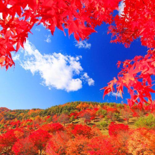 秋のトリビア